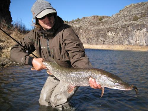 New mexico fly fishing guide photos for New mexico fishing